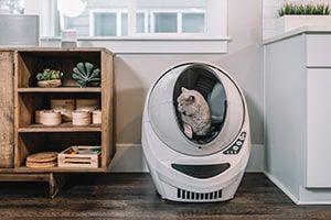 Tips for your pet-friendly Crozet apartment