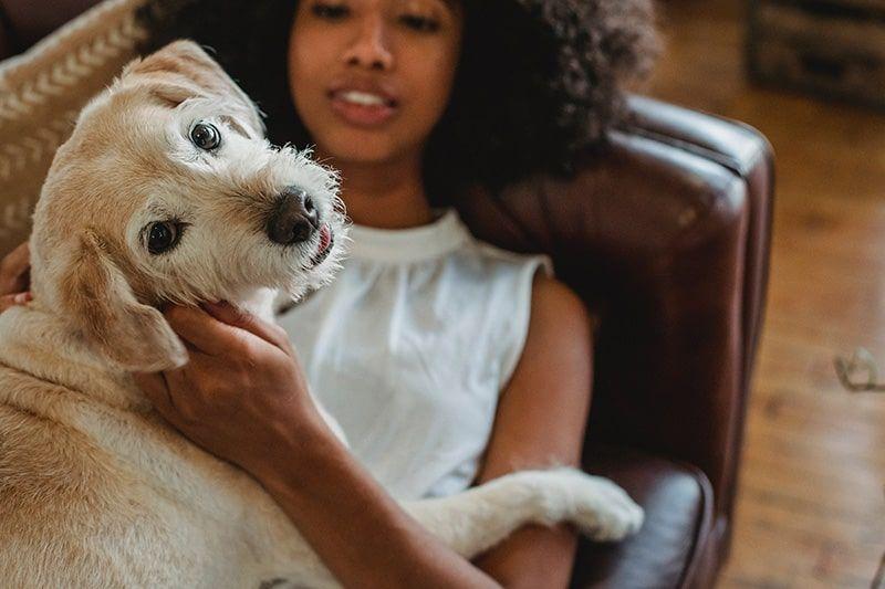 pet-friendly apartment in crozet